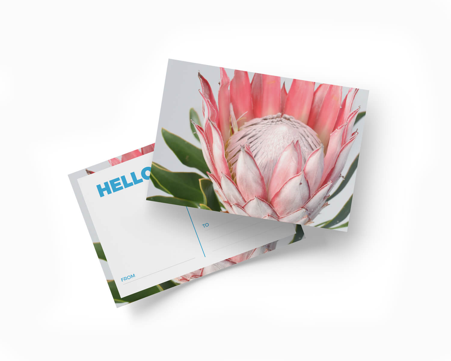 Printed postcard with a protea